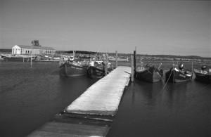 Sado Estuary - Gambia