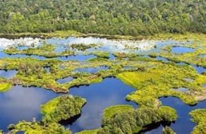Peatland in Riau, Indonesia